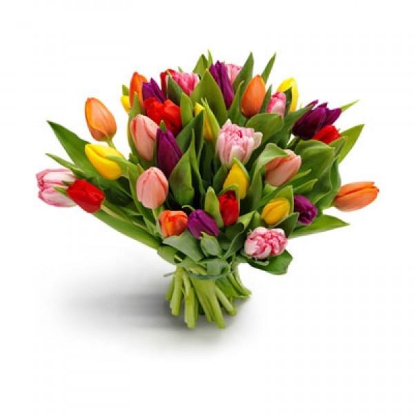Bukiet 30 tulipanów kolorowych
